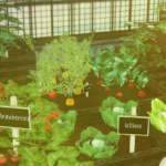 More gardening things for everyone !! ~~ ^^ ?… – yumesims | yumesims