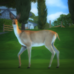 Life is Strange Animal Set + accessories[[MORE]]… – Mimoto-sims