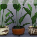 DragonQueen's Antiquities Potted Plants: Egypt