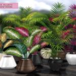 Xero Plants