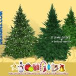 SIMcredible!'s Build up your Christmas tree – pine [large]